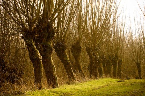boomsoorten