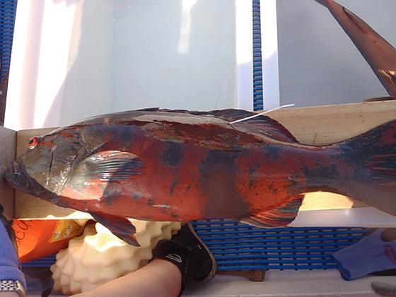 Vis met huidkanker