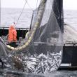Doorbraak in strijd tegen overbevissing
