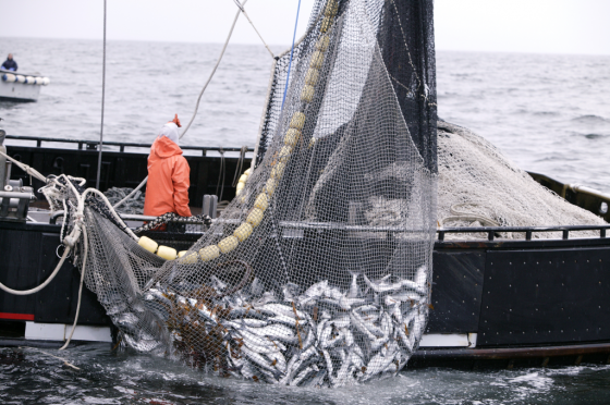 illegale visserij