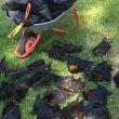 Hittegolf Australië doodt duizenden vleermuizen