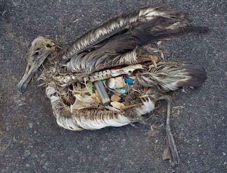 Vogel met plastic