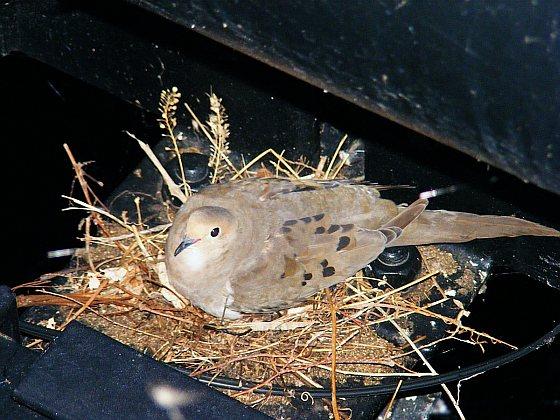 Vogelnest - Recyclende dieren