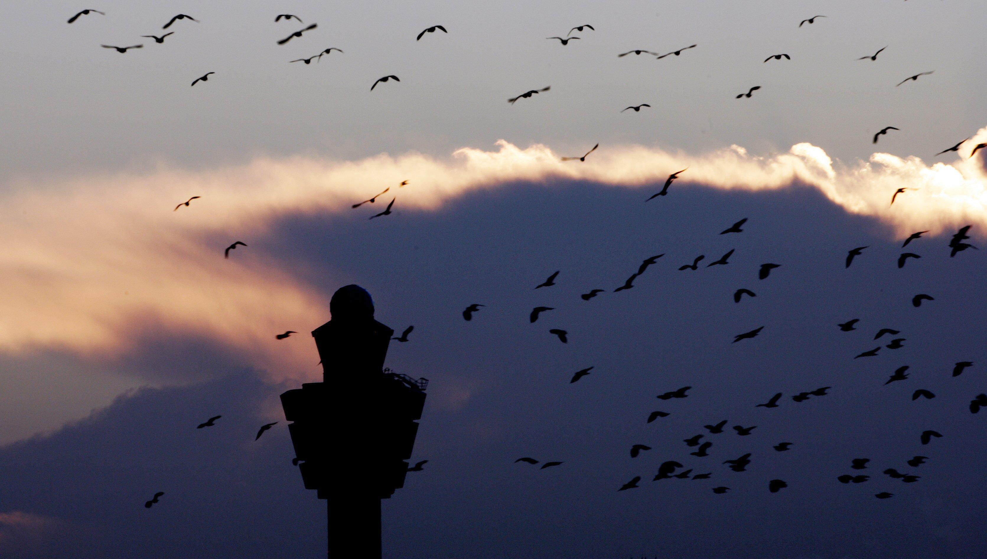 Vogels Schiphol