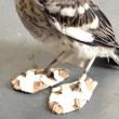 #GNvdD: Klein gewond vogeltje krijgt sneeuwschoenen