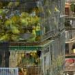 PvdD: Vogelmarkten moeten dicht!