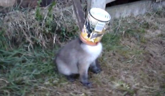 vos met hoofd vast in etensblik