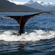 #GNvdD: Druk op Japan wegens walvisjacht neemt toe