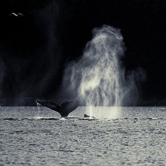 Walvis - Whaling in the Antarctic