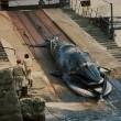Walvisjacht weer van start: Japan op het matje geroepen
