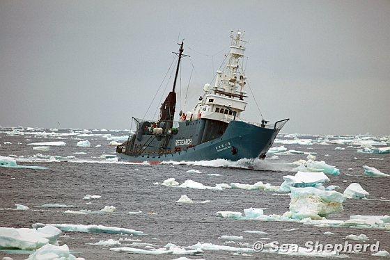 walvisvaarders japan