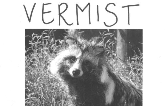 Vermiste wasbeerhond