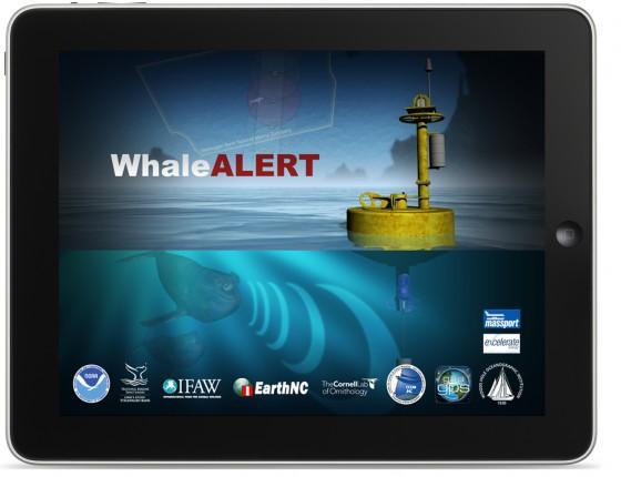 Whale Alert iPad