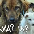Loslopende honden en katten vogelvrij?