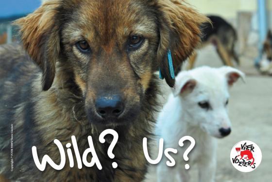 Loslopende honden en katten vogelvrij