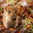 Bijeenkomst in Tweede Kamer over beheer dieren in het wild