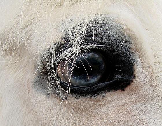 paard gewond