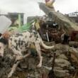 Filipijnen: WSPA redt duizenden dieren