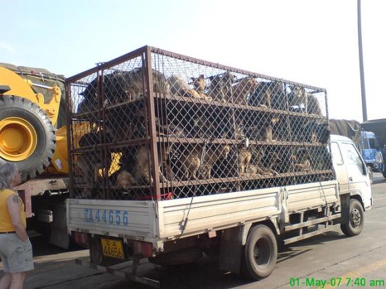 Yulin - Dog meat festival