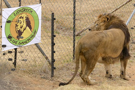 Zac in Lionsrock - dierentuin