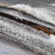 Vangstverbod wilde zalm redding Schotse zeehonden
