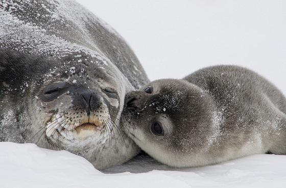 duurzame zeehondenjacht
