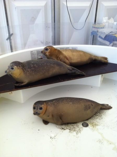 Zeehondencrèche zeehonden