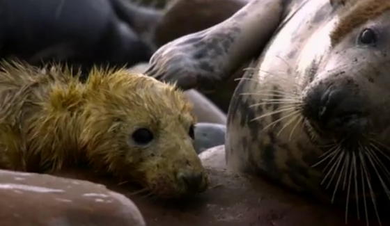 zeehondenpup krijgt zwemles