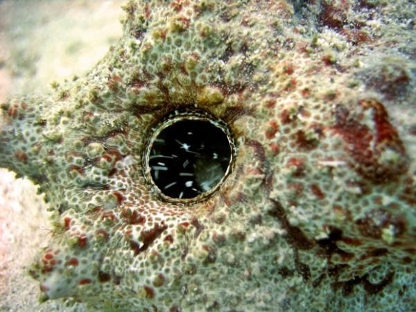 Zeekomkommer - zeekomkommers