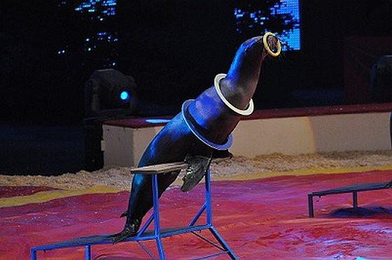 Zeeleeuw doet kunstje