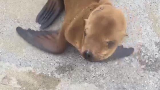 zeeleeuwenpup