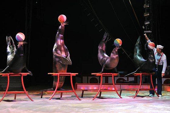 Zeeleuwen - circus