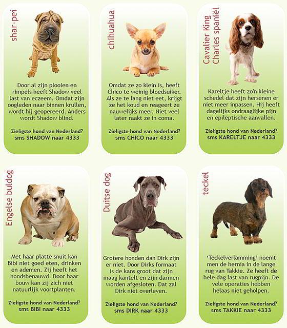 Zieligste hond