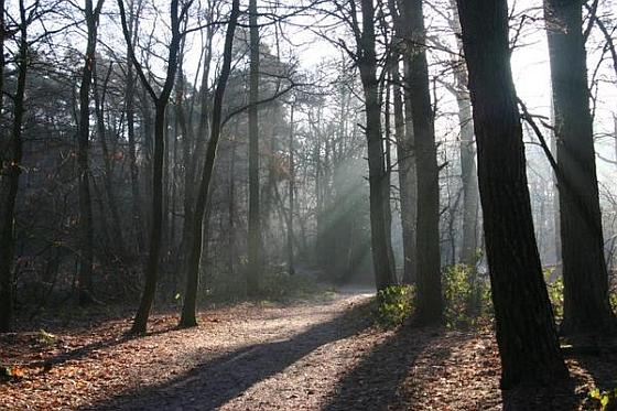 Zon in bos