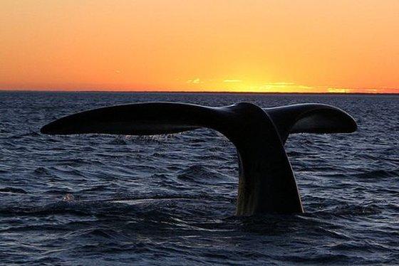 walvisreservaat