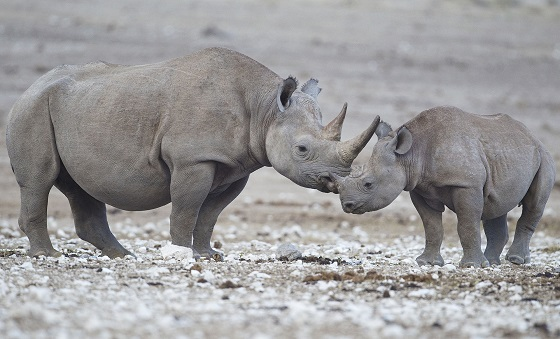 Global Anti-Poaching Act