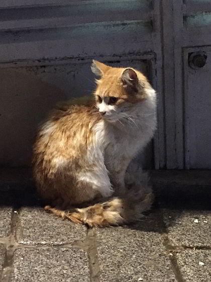 Zwerfdieren Istanbul