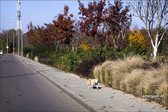 Zwerfhond langs de weg