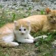 Zwerfkatten Schiermonnikoog voorlopig niet afgeschoten