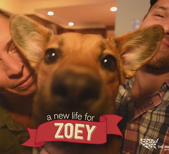 Zoey - driepotige hond