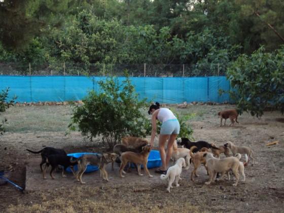 Opvangverblijf SOS Straathonden Turkije