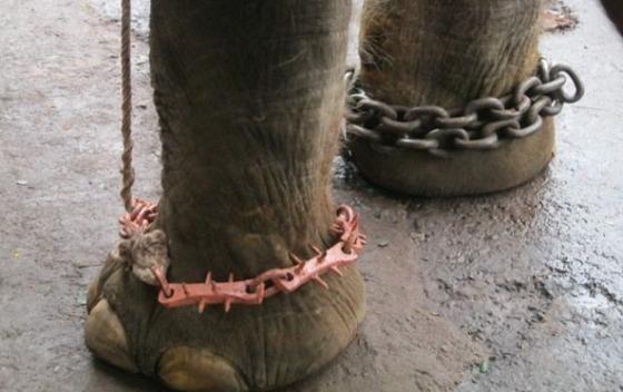 Sunder babyolifant